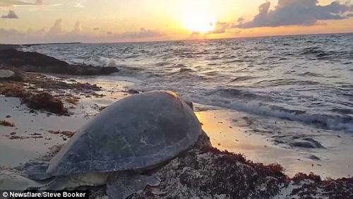 черепахе помогли перевернуться