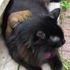 бельчонок дружит с кошкой