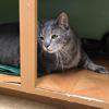 упитанный кот ищет новую семью