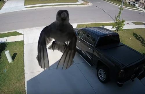птица летает не махая крыльями