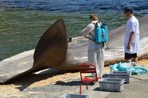 фальшивый кит на берегу