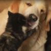 котёнок играет с псом