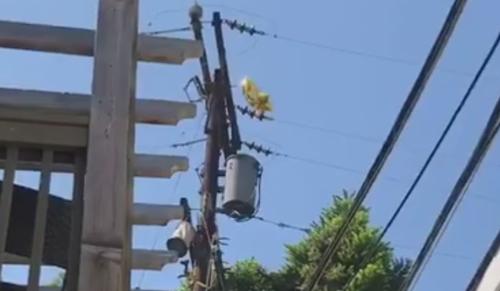 воздушные шары в проводах