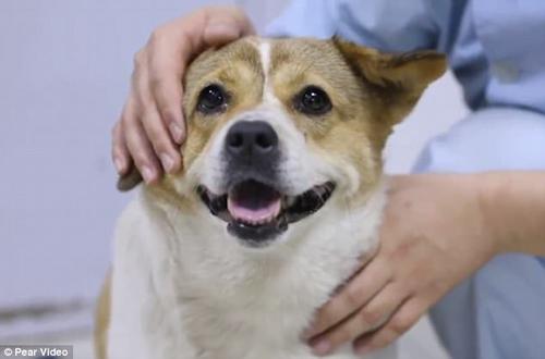 бездомная беременная собака