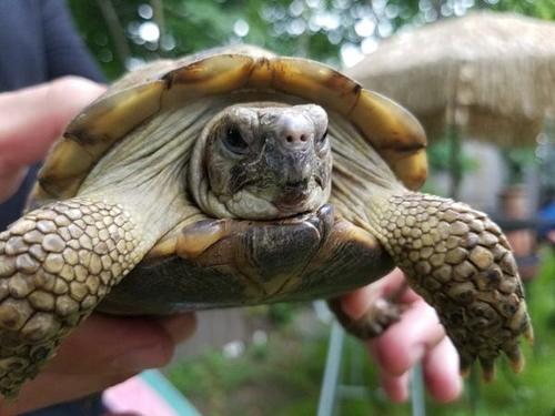 черепаха нашлась через 3 года