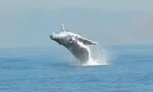 кит выпрыгнул из воды