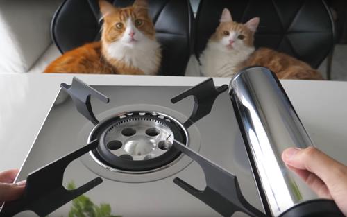 сашими для кошек