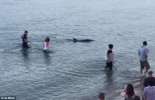 спасение заблудившегося дельфина