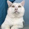 операция изменила жизнь кота