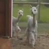 танцкласс с животными