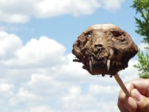 найден череп чупакабры