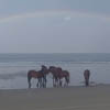 дикие лошади на фоне радуги