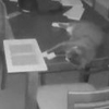 кошка активировала сигнализацию