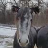 лошадь с перчатками на ушах