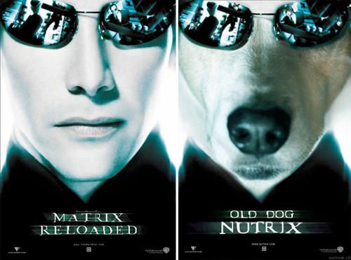 собака пародирует киноафиши
