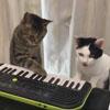 кошки играют на клавишах