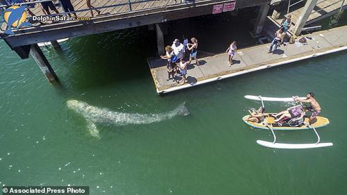 китёнок приплыл в гавань