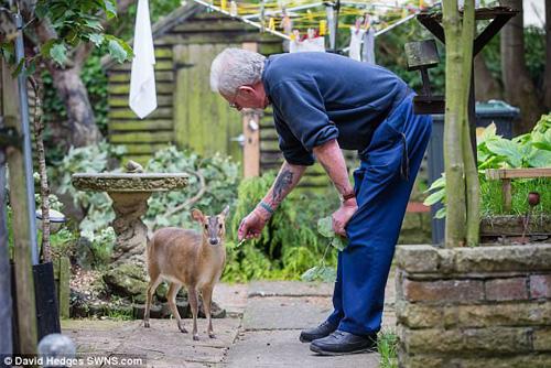 добрый дедушка спас оленёнка