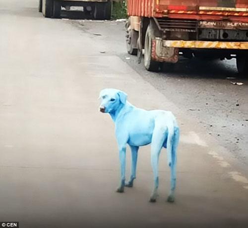 бездомные собаки голубого цвета
