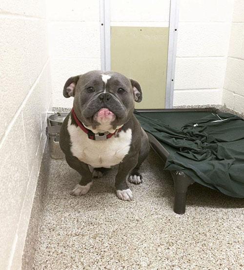 грустный пёс нашёл новый дом