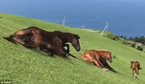 лошади катаются с горки