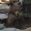 медведь разорил пруд