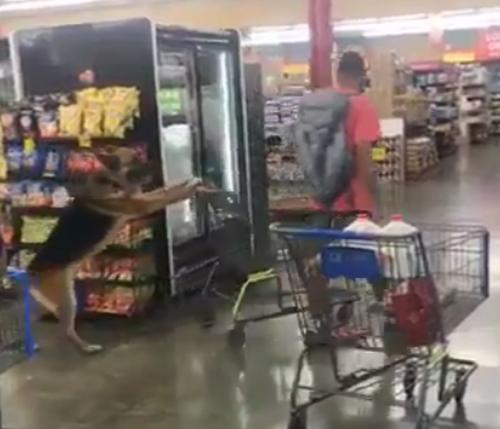 покупатель использовал труд собаки