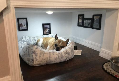 отдельная комната для собаки