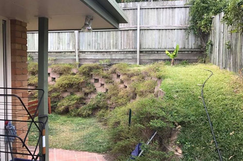 змея спряталась в саду