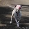 слепая и глухая собака