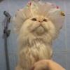 кот очень любит душ