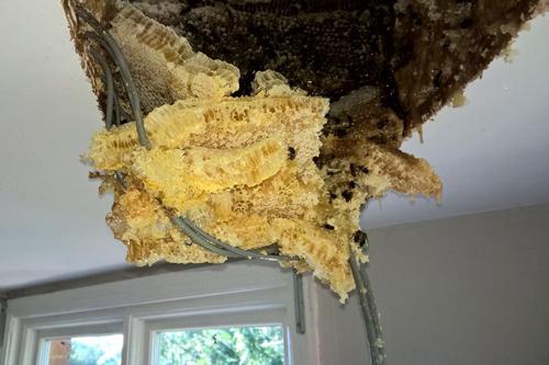 мёд начал капать с потолка