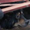собаку обнаружили по писку щенков