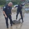 полицейский испугался рептилию