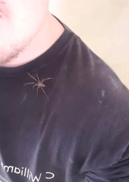 электромонтёр с пауком