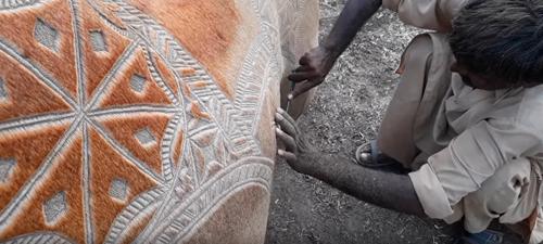 художественная стрижка верблюдов