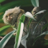 обезьянка родила близнецов
