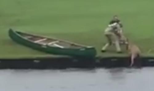 оленя спасли из пруда