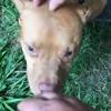 собак спасли из бойцовского клуба