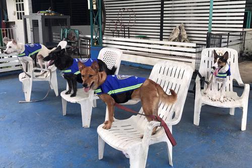 умные жилеты для собак