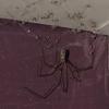 пауки замаскировались под пыль