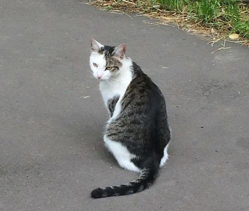 кошка с другой кошкой на спине