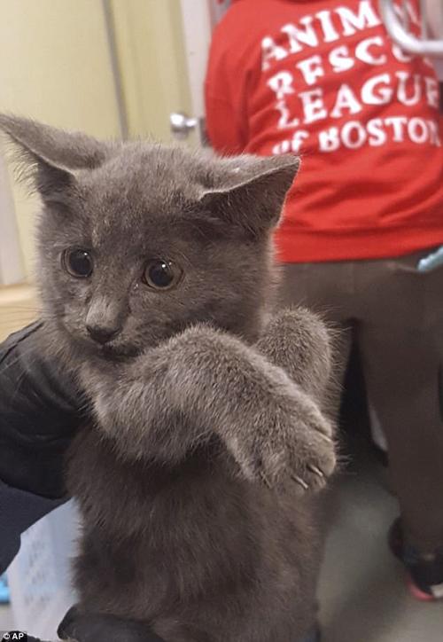 котёнка спасли из тоннеля