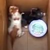 бездомные котята под домом