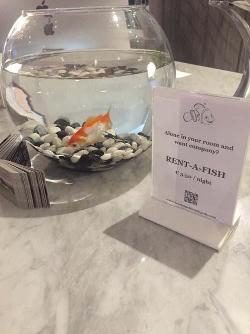 рыбки для одиноких постояльцев