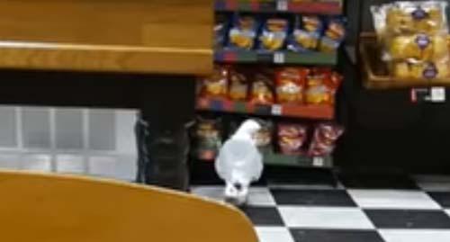 чайка похитила чипсы