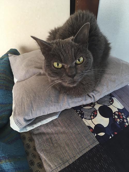 кошка со злобным лицом
