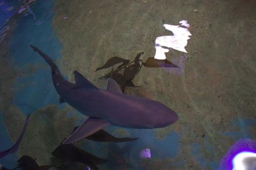 акулы в подвале дома