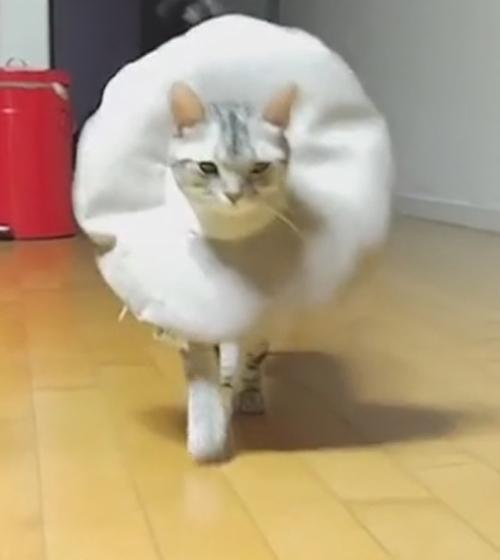 элегантная кошка в воротнике