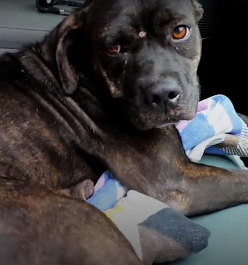бездомная собака пришла за помощью